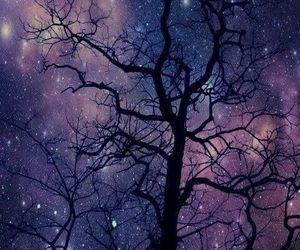forest, stars, and night image