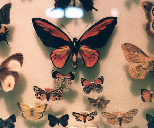 butterfly, vintage, and hipster image