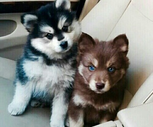 eyes, puppy, and cute image