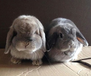 bunnies, lovely, and buns image