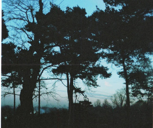 nature, trees, and hipster image