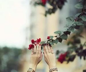flowers, hands, and red image