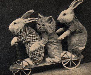 cat, rabbit, and animal image