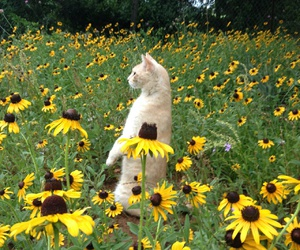 aesthetic, bee, and sunflowers image