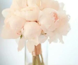 pink, soft, and flowers image