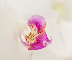 flowers, orchid, and pastels image