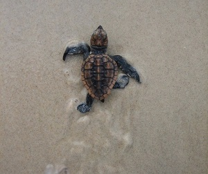 animals, beach, and cute image