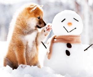 animals, dog, and snow image