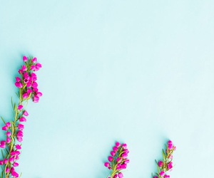 wallpaper, flowers, and background image