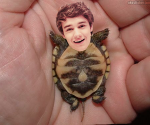 one direction, cutie, and liam payne image