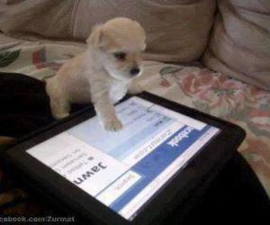puppy, ipad, and cute image