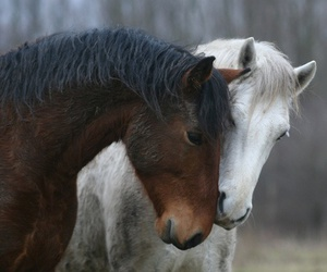 horse, love, and animal image
