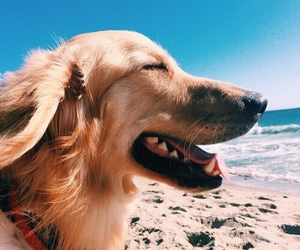 dog, beach, and animal image
