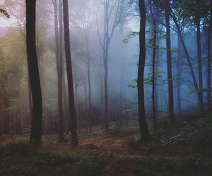 background, beautiful, and forest image