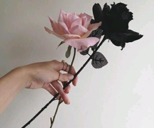 pink, black, and roses image