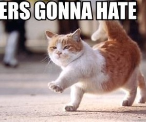 cat, haters, and funny image