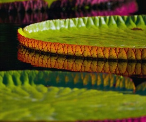 color, photography, and lily pads image