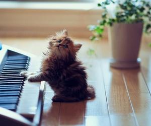 cute adorable image