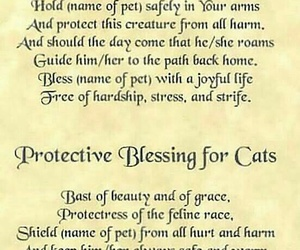 pet and spell image