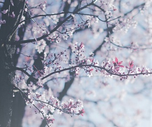 flowers, tree, and pink image