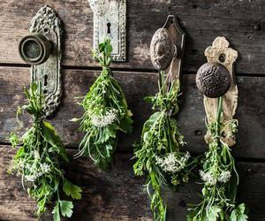 herbs, wooden, and wood image