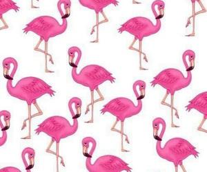 pink, wallpaper, and flamingo image