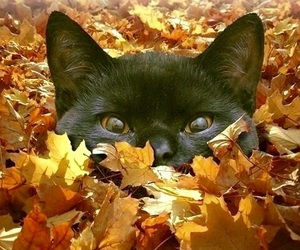 cat, cute, and leaves image