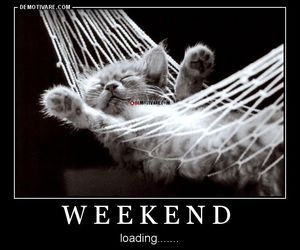 cat, cute, and weekend image