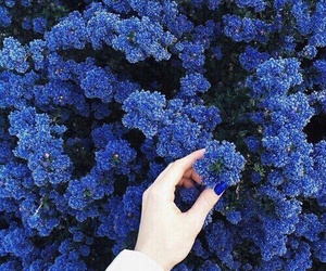 flowers, blue, and hand image