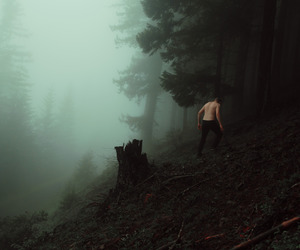 forest, mist, and woods image
