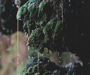 dripping, forest, and moss image