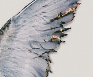 fantasy, white, and wing image