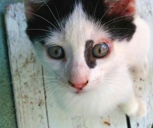 cat cute love image