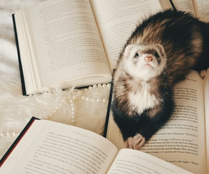 animals, books, and polecat image