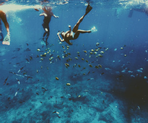 summer, ocean, and fish image