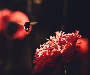 flower, fly, and Goldfrapp image