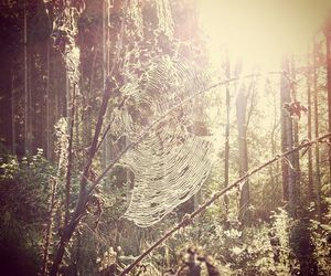 forest, Goldfrapp, and nature image