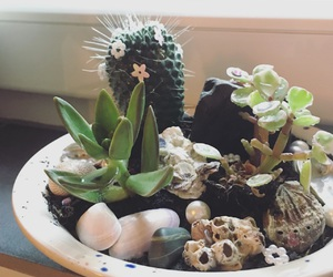 cactus, diy, and sweet image