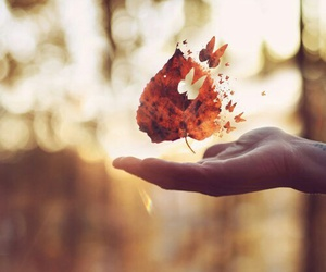 butterfly, leaves, and autumn image