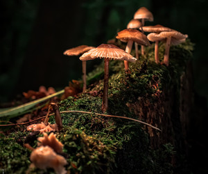 forest, moss, and mushrooms image