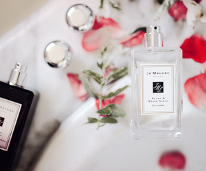 beauty, collection, and fragrances image