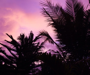 sky, purple, and tropical image