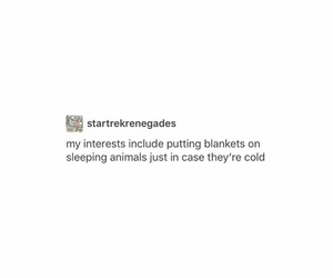 animals, cats, and cold image