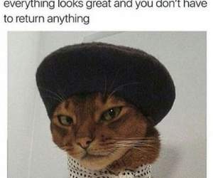 animal, cat, and clothes image