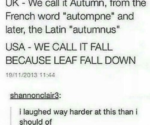 automn, fall, and funny image