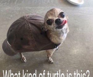 dog, funny, and hat image