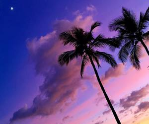 nature, palms, and sky image