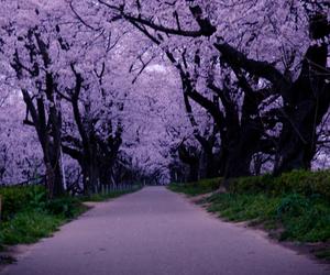 tree, nature, and purple image
