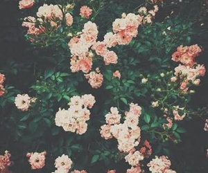 flores, indie, and flowers image
