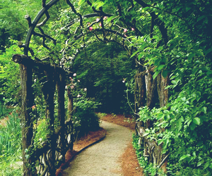 garden, nature, and path image